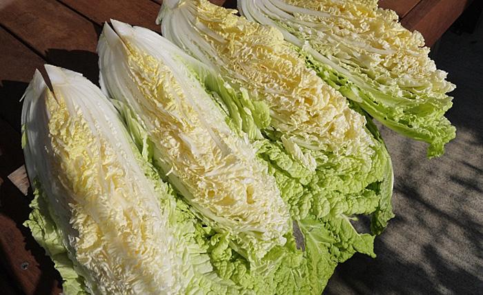 白菜 保存方法
